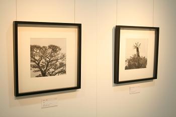 「Tree」 丸山松彦 作
