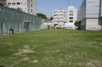 春が来て青々と芝生も生い茂っています!!