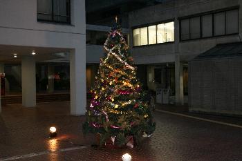 6号館前には大きなクリスマスツリーが!!