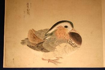狩野晴皐(? ~1867)筆  異国渡り禽鳥写生図 江戸時代後期