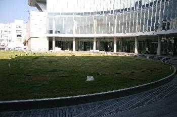 現在の芝生の様子(影っててわかりづらいですよね。すみません。)